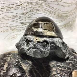 特價一天/國姓黃龜甲福龜