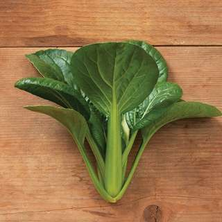 vegetable seed . 'green pac' bok choy
