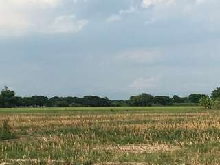 1.5 Hectares Farmland For Sale ( Mexico, Pampanga)