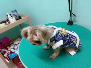 Pet dressing in blue
