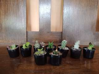 Baby Cactus & Succulents for Sale!