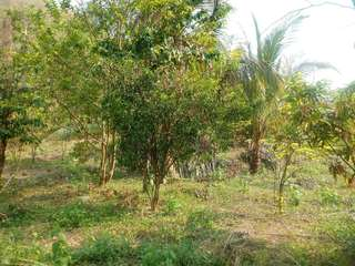 Farm lot or for sale tanay rizal