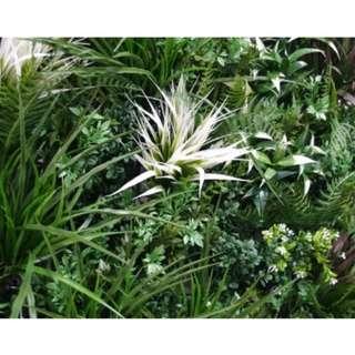 UV Stabilized Tropical Fern Select Range Vertical Garden 100cm X 100cm