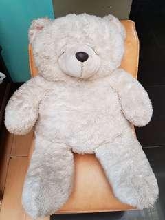 White Teddy XLarge