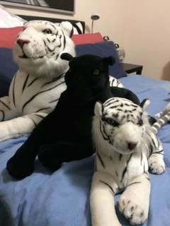 White TIGERS & Black LEOPARD
