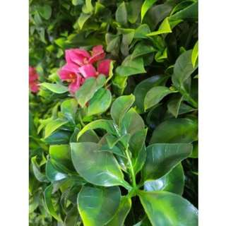 Pink Lily Vertical Garden UV Stabilised 1m X 1m