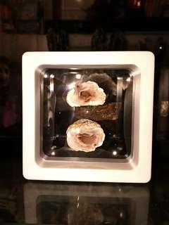 天然水晶洞原石 迷你聚寶盆D款 全套連展示盒