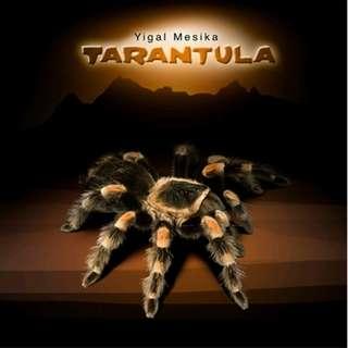 Tarantula by Yigal Mesika levitation magic trick