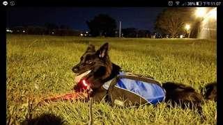 寵物狗狗包包