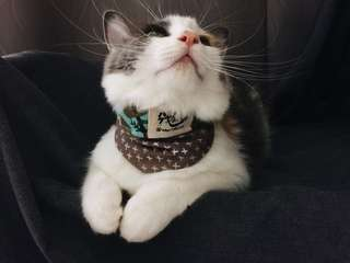 Reversible Cat Bandana (Wink in Brown)