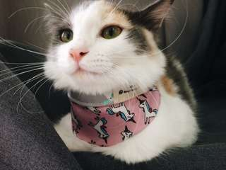 Reversible Cat Bandana (Pink Unicorn)