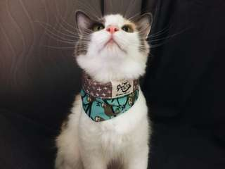 Reversible Cat Bandana (Hanging Sloth)