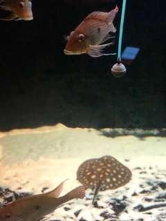 Tank & Fish