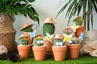 Cactus arrangement in terracotta pots