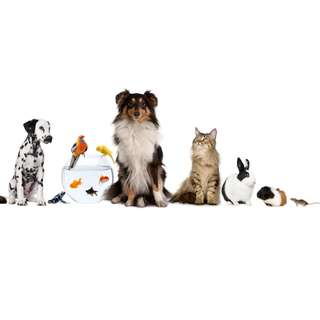 Pet Sitter / Boarding Available