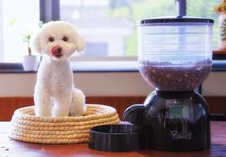 Automatic Pet Feeder (Dogs/Cats)