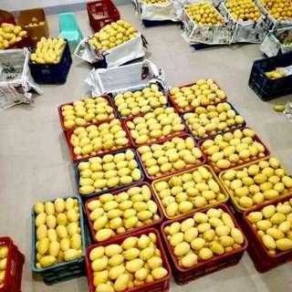 Manggoes for sale