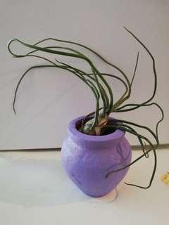 Air Plants with Mini Jars