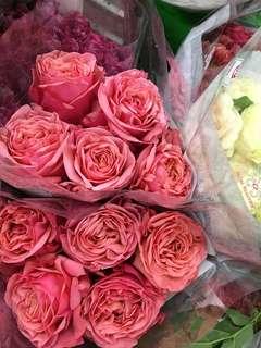 Garden Rose Spray Premium Roses NL