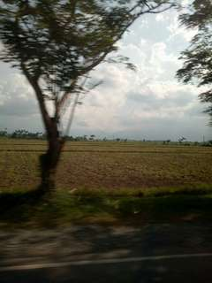Farmland for Sale in Munoz ,Nueva Ecija