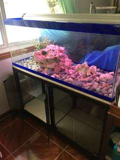 75 Gallon Aquarium with Glass Cabinet
