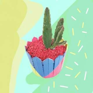 Cactus dan sukulen