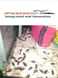 Pest Control Services / Affordable