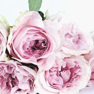 Sandalwood Rose Fragrance Oil