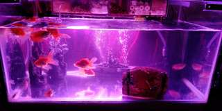 Self made aquarium can call me if interested 011-26231031