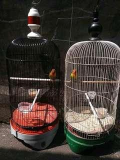 Love Bird Josan ( 2 ekor full set )