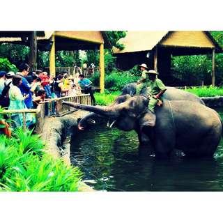 Zoo / Bird Park / River Safari / Night Safari