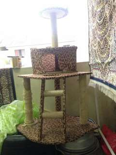 Pampered Cat with tree house