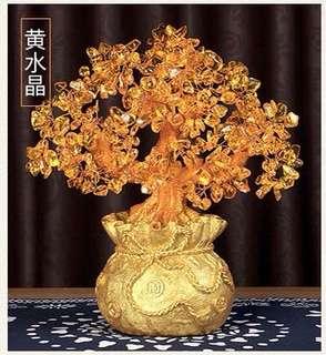 黃水晶金錢樹