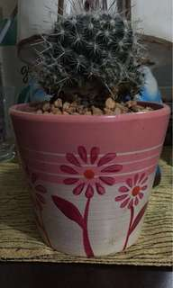 Cactus on ceramics pot
