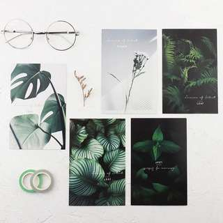 (PO) Silent Leaves Postcard/ Post Cards