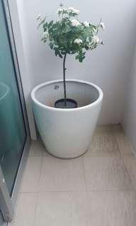 Big white vase / Pot