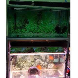 Two 3 x 1.5 x 1.5 ft tanks with iron stand