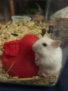 URGENTLY LOOKING FOR HAMSTER CAGE
