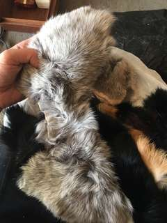Lot of Genuine Fur Scraps