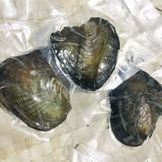 INDIVIDUALLY WRAPPED VACUUM SEALED LIVE OYSTERS WITH PEARLS
