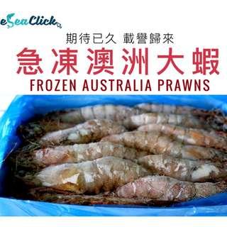 急凍澳洲大蝦