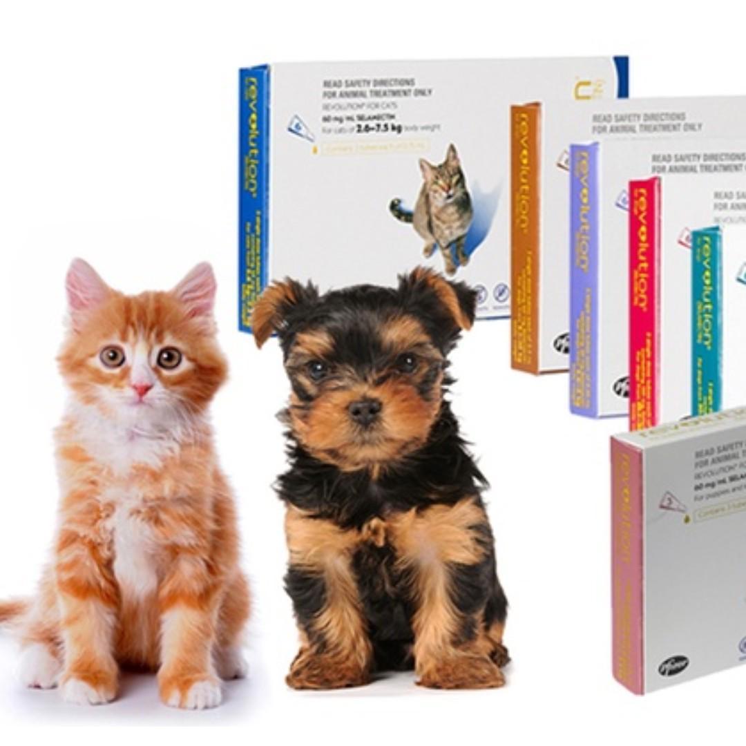 防蟲防蝨 Revolution Kitten Puppy 滴頸劑