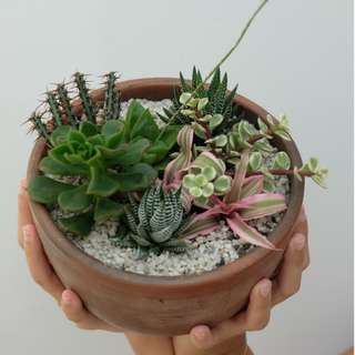 Kaktus/ Succulent/ Cactus Arrangement in a Bowl