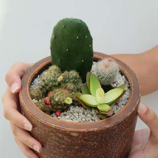 Kaktus/ Succulent/ Cactus Arrangement 2