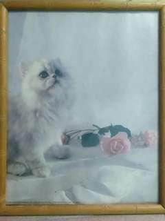 Cat and Rose 🌹
