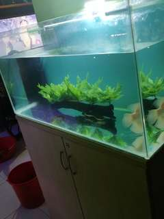 3ft fish tank with cabinet & fish