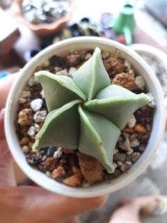 Astro Cactus