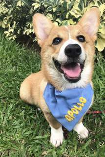 Personalized dog cat bandana