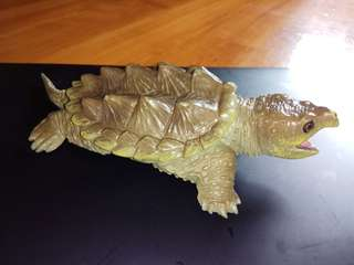 Alligator Snapping  Turtle 瀕危的鱷魚鱷龜