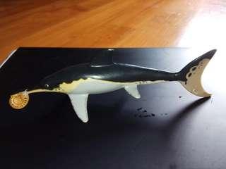 瀕臨滅絕的 海豚